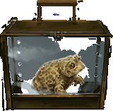 Natterjack-toad-lrg