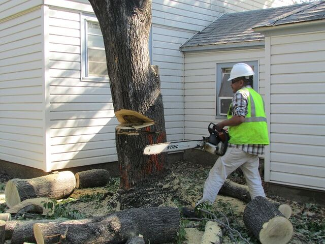 File:Dallas Tree Removal - DFW Tree Removal.jpeg