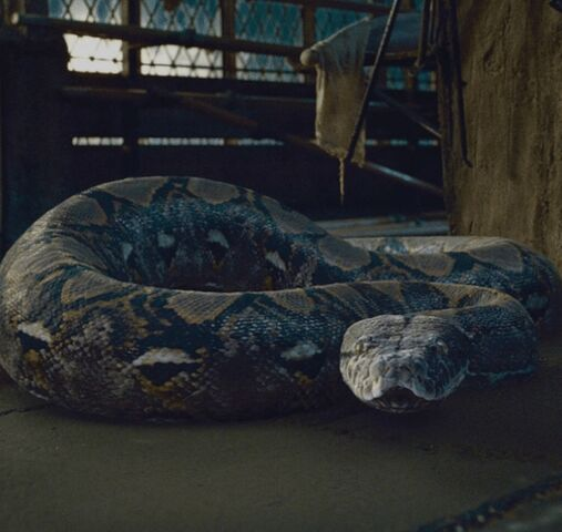 File:Nagini the Viper.jpeg