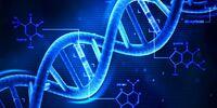 DNA Link