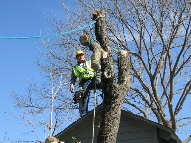 File:DFW Tree Removal - Dallas Tree Service - 214- 556-5079 - Dallas Tree Removal.jpeg