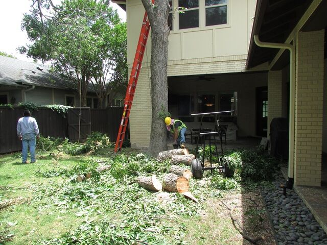 File:DFW Tree Removal - 214- 556-5079.jpeg