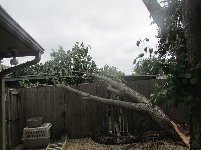 File:Dallas Tree Service - 214- 556-5079.jpeg
