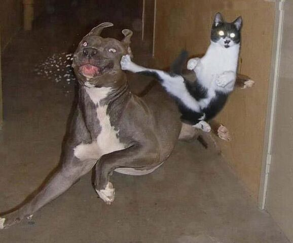 File:A.aaa-Kung-Fu-Cat.jpg