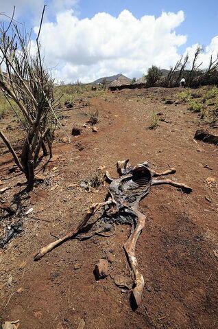 File:Drought.jpg