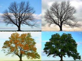 File:Four Seasons - Longbridge Road.jpg