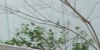 Tazuko