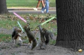 SquirrelLightsaber