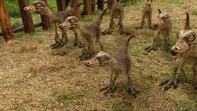 File:1x4 OrnithomimusChicks.jpg