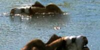 Saving the Sabretooth