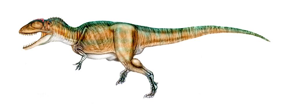 Resultado de imagen de # Carcharodontosaurus Saharicus