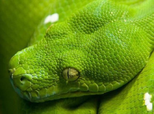 File:Snake2.jpg