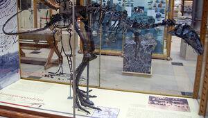 EustreptospondylusSkeleton