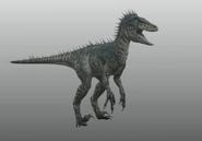 Raptor-model2
