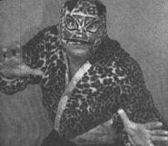 The Cheetah Kid