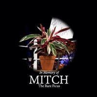 Mitch The Ficus