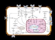 Signal transduction v1