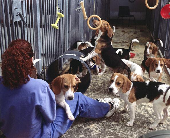 File:Dogs6CCcopy.jpg