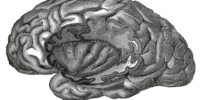 Vestibular cortex