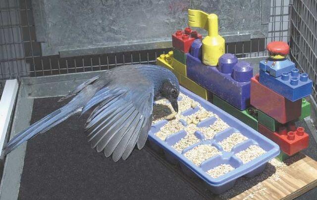 File:Caching bird.jpg