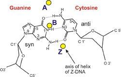 B&Z&A DNA formula