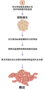 Cancer requires multiple mutations from NIH