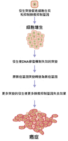 File:Cancer requires multiple mutations from NIH.png