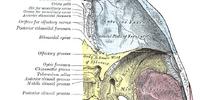 Trigeminal ganglion