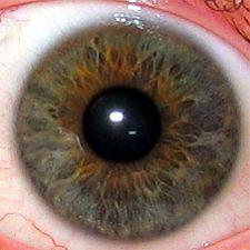 File:Iris.eye.225px.jpg