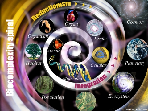 File:Biocomplexity spiral.jpg