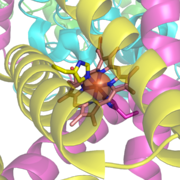 Succinate Dehygrogenase 1YQ3 Haem group