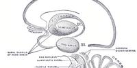 Periaqueductal grey matter