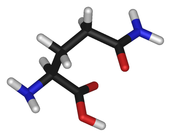 File:L-glutamine-3D-sticks.png