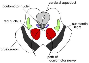 File:Cn3nucleus.png