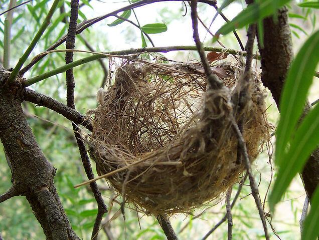 File:Basket style nest.jpg