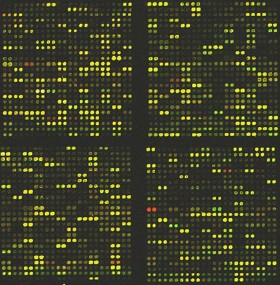 File:DNA microarray.jpg