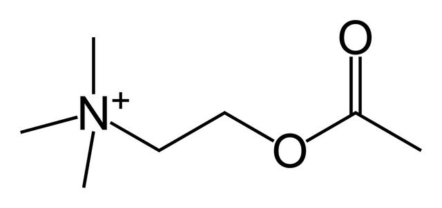 File:Acetylcholine-skeletal.png