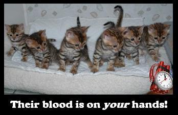 File:Panic kittens.jpg