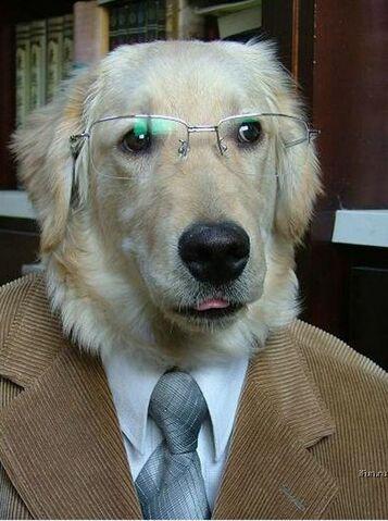 File:Professordog.jpg
