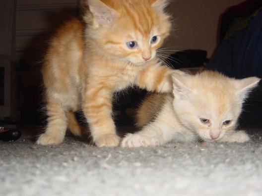 File:71.229 kitty.jpg