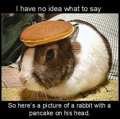 File:BunnyPancake.jpg