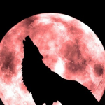File:Thewolf1.png