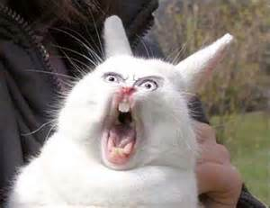 screaming bunny Gallery