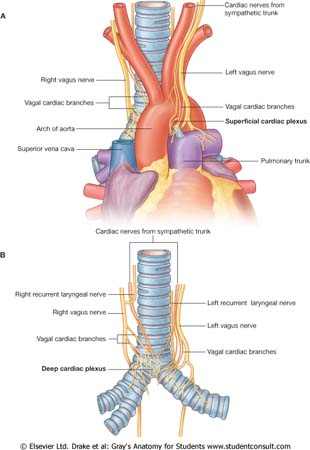 spurt and shunt muscles pdf