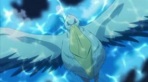 Rain Pelican