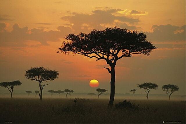 File:Africa-acacias-puesta-sol.jpg