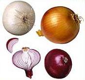 File:Onion v1.jpg