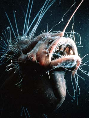 File:AnglerFish.jpg