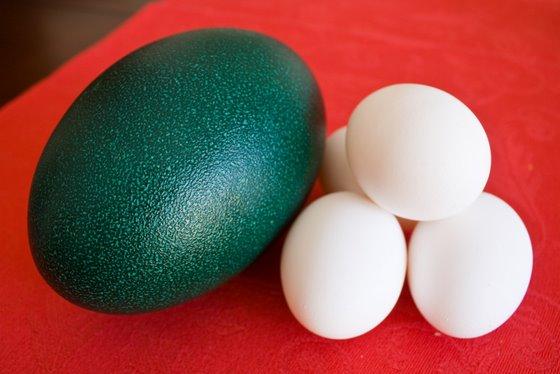 File:Emu egg.jpg