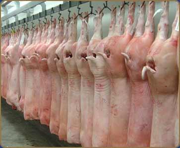 File:Schweinefleisch.jpg